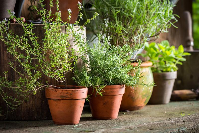 April 2021 800 - Seasonal Gardening Tips